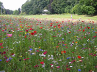 Pictoral meadow situated at the Eastern side of Congleton Park.
